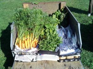 Carrots, Blueberries, Mint, Chard & Kale
