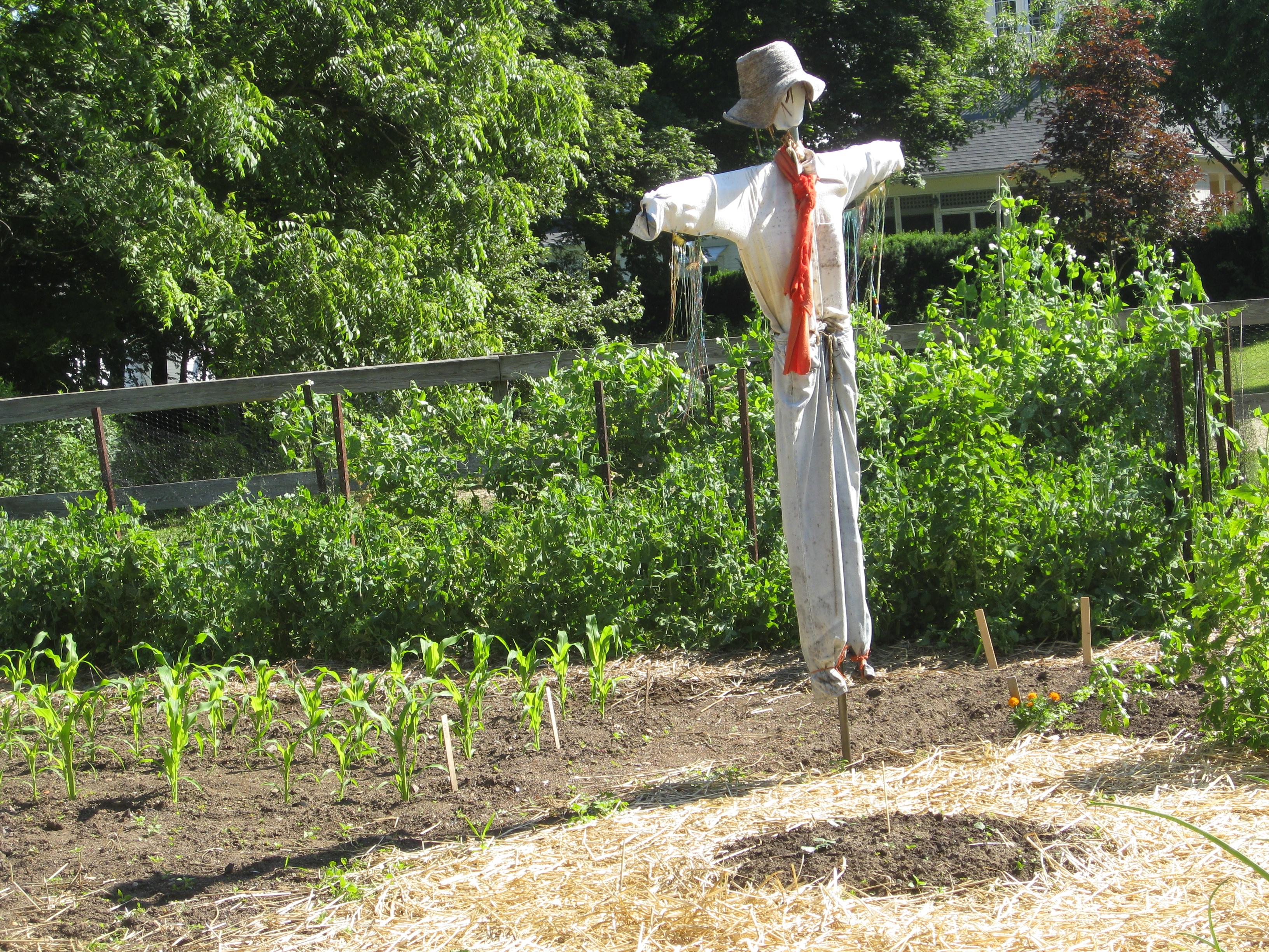 Garden scarecrow garden ftempo Golden state humane society garden grove ca