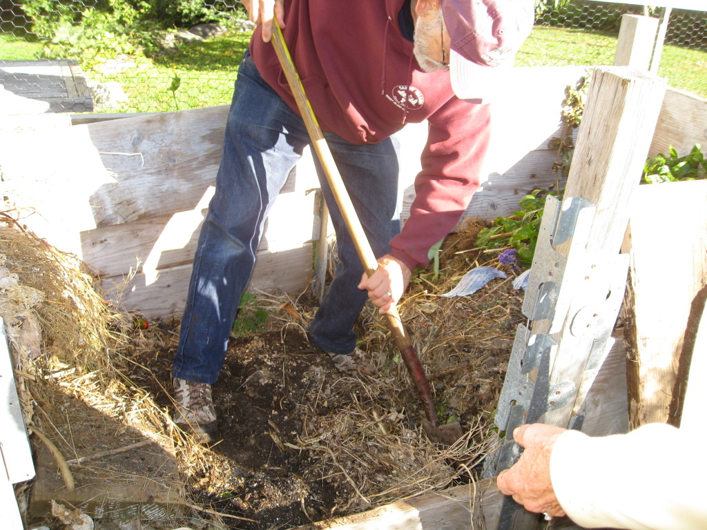 Digging rich soil from the compost bin