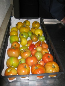 3 varieties of tomatoes