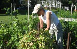 2015_07_11 picking beans