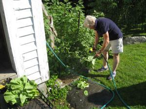 2015_07_11 washing lettuce