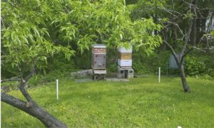 The new bee hives arrived. I think I heard that each hive has a queen and 200 young bees. They have taken up residence in a new spot on the side of the barn. According to Carla, they seem very happy—lots of activity, which is a good sign.